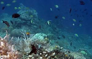 keindahan-laut-bunaken